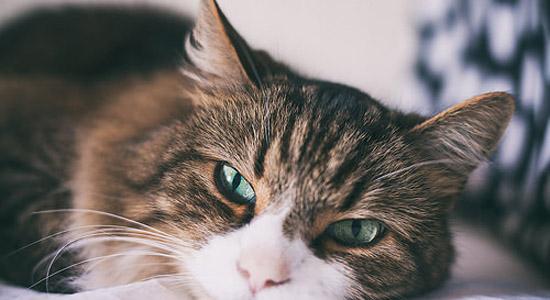 publicidad gatos Arnold Madrid