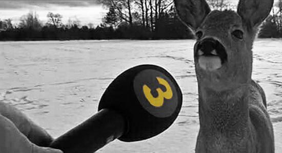 ciervo viral meme arnold madrid